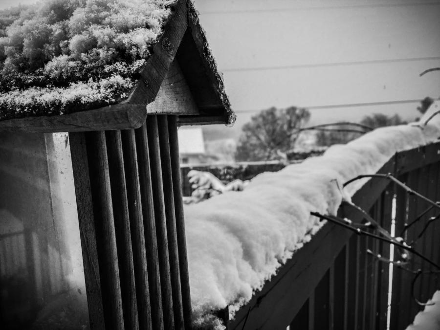 Snow 2019-6